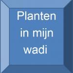planten in mijn wadi
